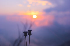 Sunrise on the top of mountain in Chaingmai, Thailand. With a couple of flower Royalty Free Stock Images
