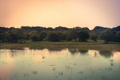 Sunrise tranquil river scenery landscape with reflection on calm water in Yala national park reserve wetlands in Sri Lanka in ora. Sunrise tranquil river scenery royalty free stock images