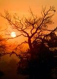 Sunrise through a tree Royalty Free Stock Photos