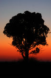 Sunrise with Tree Stock Image
