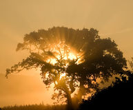 Sunrise Tree. Rays of light shining through the branches of a tree at dawn Stock Photos