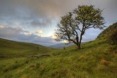Sunrise Tree. Early morning in Brecon Beacons Stock Photo