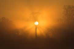 Sunrise tree. A foggy sunrise with the sun behind a tree stock photo