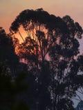 Sunrise Tree Stock Image