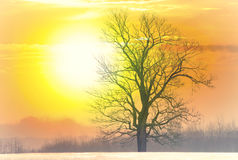 Sunrise and a tree stock images