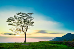 Sunrise and tree Royalty Free Stock Photography