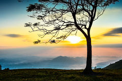 Sunrise and tree Stock Image