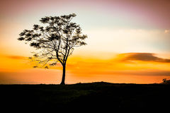 Sunrise and tree Stock Images