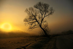 Sunrise tree Royalty Free Stock Photos