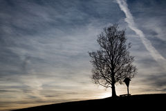 Sunrise with tree. And black silhouette Royalty Free Stock Photo
