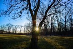 Sunrise through tree Royalty Free Stock Photo