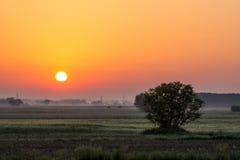 Sunrise and tree Stock Image