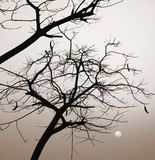 Sunrise, tree`s silhouette. Monochrome image, sunrise, tree`s silhouette Stock Photo
