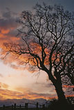 Sunrise Tree Silhouette. A tree dramatically sihouetted against a sunrise Royalty Free Stock Photography