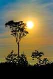 After sunrise. With tree Silhouette in Bondowoso, east java,  Indonesia Stock Photography