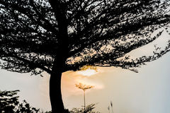 Sunrise and tree, Silhouette photography. Stock Images