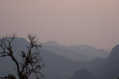 Sunrise and tree silhouette. Taken from the north of Thailand Stock Photography