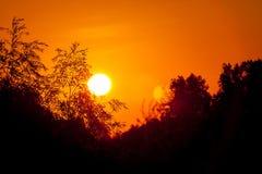 Sunrise tree silhouettes Stock Photography