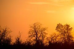 Sunrise tree silhouettes Stock Photos