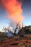 Sunrise tree in the Utah desert. Royalty Free Stock Photo
