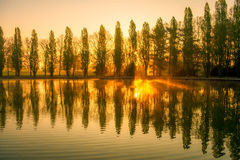 Sunrise with trees alignment and water reflections stock image