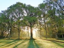 Sunrise through trees, Chorleywood Common royalty free stock photos