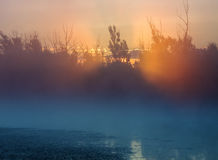 Sunrise through trees on foggy lake Stock Photos