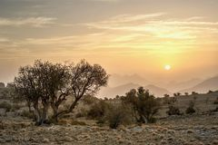 Sunrise in the mountains with trees. Sunrise with trees, location: Kingdom of Oman, Jebel Akhdar in more than 2300 meter above sea level royalty free stock image