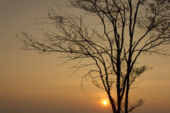 Sunrise trees at loei  Province in Thailand Royalty Free Stock Photos