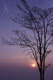Sunrise trees at loei  Province in Thailand Royalty Free Stock Photo