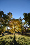 Sunrise, trees, NJ New Jersey. Early orange light through yellow fall leaves. Long shadows. New Jersey NJ royalty free stock images