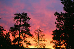 Sunrise among trees in Oregon. Fierce sunrise with trees in the foreground pink, red and purple and orange fire lit sky. Sunrise along the roadside in early stock photo