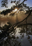 Sunrise and Trees reflected in still water through pine branches, with lens flare Stock Image