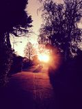 Sunrise through trees and street. Sunset off of road with my car in distance.  Surrounded by trees Stock Photography