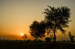 Sunrise with trees. Sun rising at highway of india, from indore to guna road Stock Photo