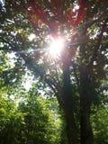 Sunrise through trees Royalty Free Stock Images