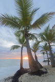 Sunrise on the tropical beach. Royalty Free Stock Photos
