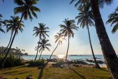 Sunrise on the tropical beach with palm trees in Sri Lanka. Mirissa beach, Asia Royalty Free Stock Photo