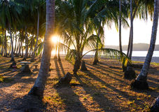 Sunrise at tropical coastline. Costa Rica Royalty Free Stock Photography