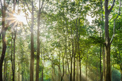 Sunrise at a tropical forest Stock Photo