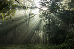 Sunrise in tropical forest Stock Photos