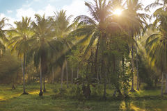 Sunrise. In tropical garden of Thailand Stock Images