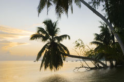 Sunrise on the tropical island. Pristine beach of Praslin tropical resort island stock images