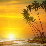 Sunrise, tropical palm trees and ocean Stock Photos