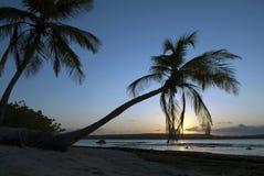 Sunrise in the tropics Stock Image