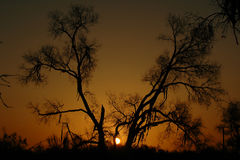 Sunrise in turang's forest. (shadow-figure Royalty Free Stock Photo