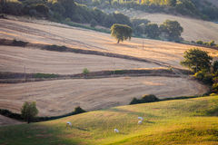 Sunrise in tuscan countryside, Tuscany, Italy Royalty Free Stock Photo