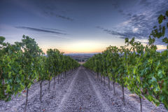 Sunrise in Tuscany Royalty Free Stock Images