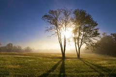 Sunrise Through Two Tree. Sunrise through tree with foggy field with dew on the grass Royalty Free Stock Photography