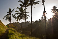 Sunrise in Ubud Bali, Indonesia Royalty Free Stock Photos